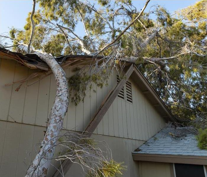 "< img src =""tree.jpg"" alt = ""large downed tree laying on top of light brown house"">"